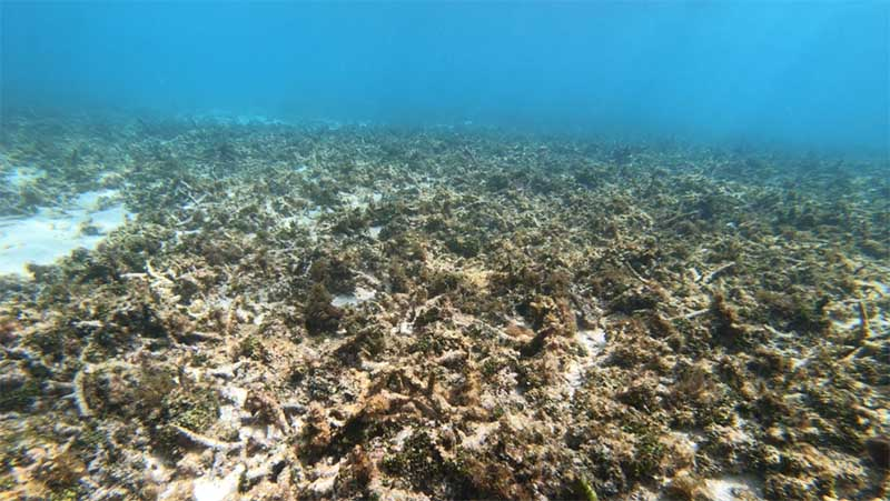 Underwater coral reef that is bare and drab