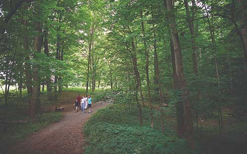 Photo of a family of five; two daughters, a son, and mother and father, walk along a dirt path through a grove of pine trees.