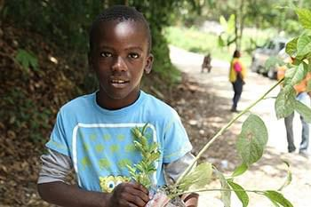Haiti little boy with plants